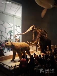 自然博物馆3